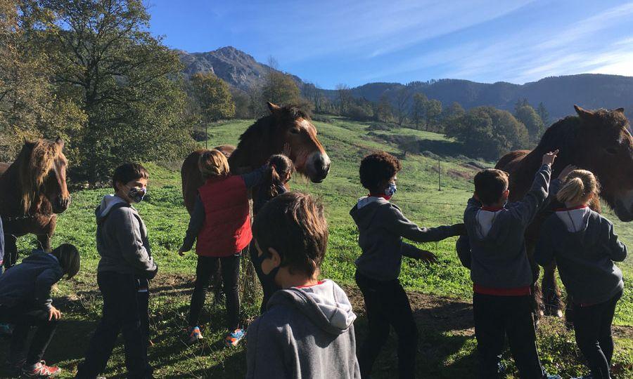 dima-caballos
